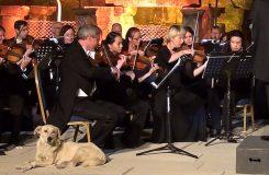 Pes vběhl na koncertní pódium poslouchat Mendelssohna. Podívejte se na video